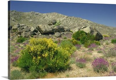 Arid landscape with plants and bushes in flower, near Avila, Castile Leon, Spain