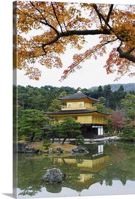 Autumn colour leaves, Golden Temple, Kinkaku ji (Kinkakuji), Kyoto, Japan