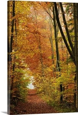Autumn forest in the Neckar valley, Baden-Wurttemberg, Germany