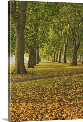 Autumn, Hyde Park, London, England