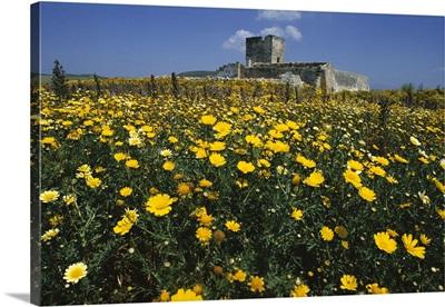 Banks of wild spring flowers in the Marsala hills, near Marsala, Sicily, Italy, Europe