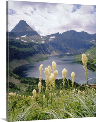 Beargrass, Hidden Lake and Mount Reynolds, Glacier National Park, Montana