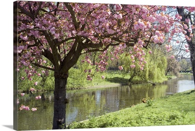 Blossom, Regents Park, London, England