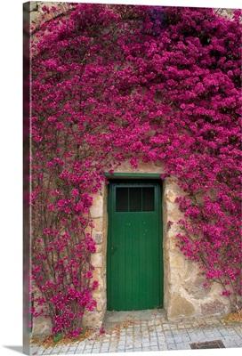 Bougainvillea glabra around a green wooden door on Tibidado in Barcelona, Spain