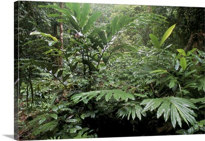 Broad leaved plants and ferns, Malaysia, Borneo