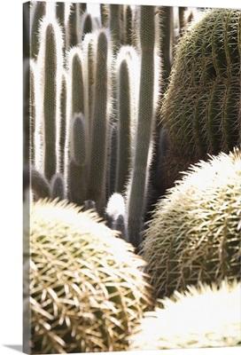 Cacti in the Exotic Garden, Monaco, Cote d'Azur, Mediterranean, Europe