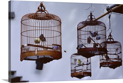 Caged birds for sale, Yuen Po Street Bird Garden, Mong Kok, Kowloon, Hong Kong