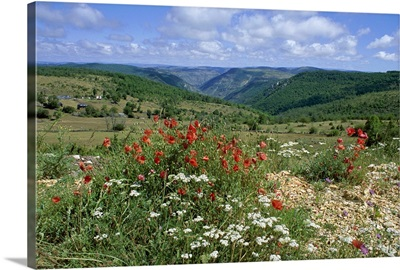 Causse Mejean, Gorges du Tarn behind, Lozere, Languedoc-Roussillon, France