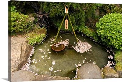 Cherry blossom petals in water fountain, Kamakura city, Honshu island, Japan