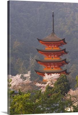 Cherry blossoms, Itsukushima shrine, Miyajima, island of Honshu, Japan