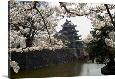 Cherry blossoms, Matsumoto Castle, Matsumoto city, Honshu island, Japan