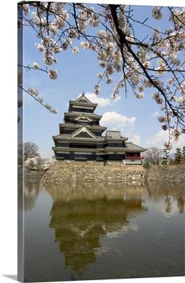 Cherry blossoms, Matsumoto Castle, Matsumoto city, Japan