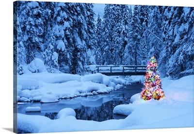 Christmas Tree, Emerald Lake, Yoho National Park, British Columbia, Canada