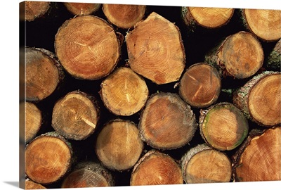 Close-up of cut logs in a timber pile, Hassness Wood, Cumbria, England, UK