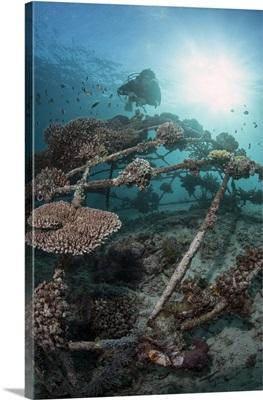Coral encrusted biosphere in the marine reserve at Gangga Island, Sulawesi, Indonesia