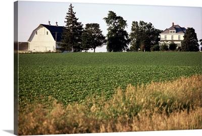 Cornfarm, Hudson, Illinois, Midwest, United States of America, North America