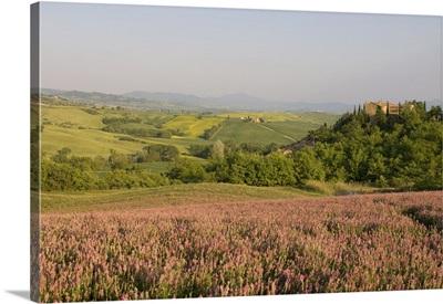 Countryside near Pienza, Val d'Orcia, Siena province, Tuscany, Italy