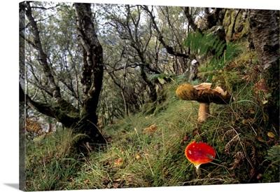 Damp forest near Portree, Isle of Skye, Inner Hebrides, Scotland, UK