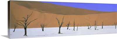 Dead trees and orange sand dunes, Dead Vlei, Namib Desert, Namibia, Africa