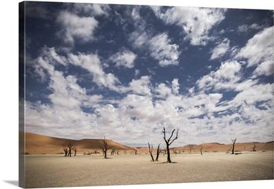 Dead trees in Sossusvlei, Namibia, Africa