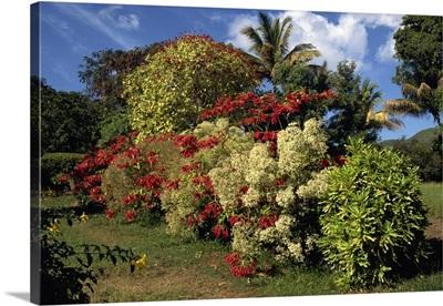 Detail from the gardens of the Caribelle Batik Offices, St. Kitts, Caribbean