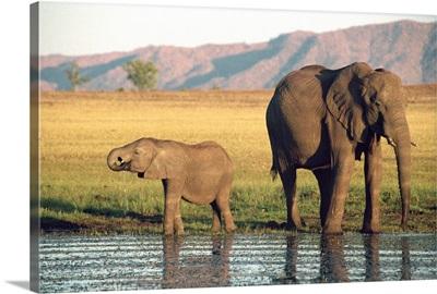 Elephant and calf, Fothergill Island, Lake Kariba, Zimbabwe, Africa