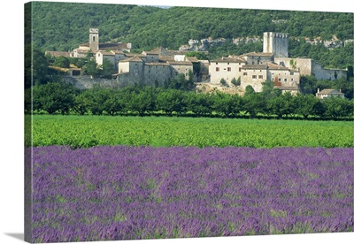 Field of lavender and village of Montclus, Gard, Languedoc-Roussillon, France