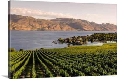Grape vines and Okanagan Lake, British Columbia, Canada