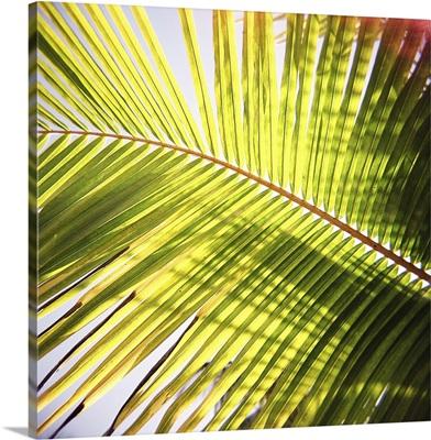 Green palm leaves, Zanzibar, Tanzania, Africa