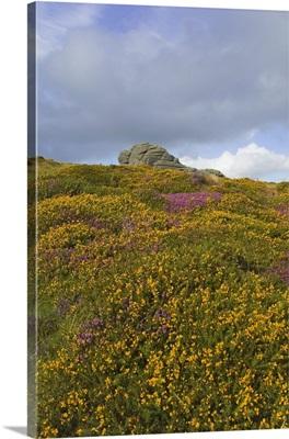 Hay Tor rocks and wild flowers, Dartmoor, Devon, England, United Kingdom, Europe