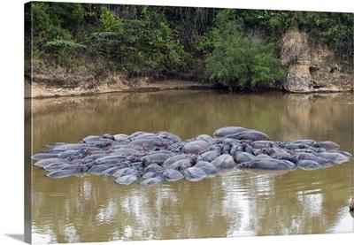 Herd of Hippopotamuses, , Masai Mara National Reserve, Kenya, East Africa
