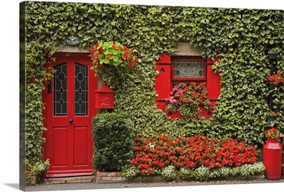 Ivy covered cottage, Town of Borris, County Carlow, Leinster, Republic of Ireland