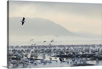 Lake Nakuru National Park, Kenya, East Africa, Africa