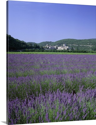 Lavender fields and the village of Montclus, Gard, Languedoc-Roussillon, France