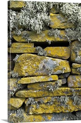 Lichen on rocks, Broch of Mousa. Mousa Island, Shetland Island, Scotland