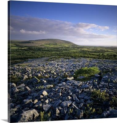 Limestone pavement, The Burren, County Clare, Munster, Republic of Ireland