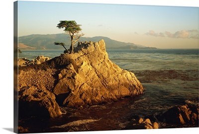 Lone cypress tree on rocky outcrop at dusk, Carmel, California, USA