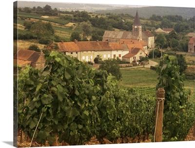 Maconnais vineyards, Poilly Fuisse, Ozenay, Saone-et-Loire, Burgundy, France