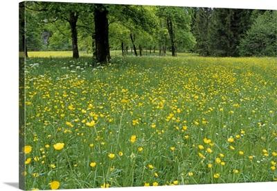 Meadow in spring time, Karwendel, Bavaria, Germany, Europe