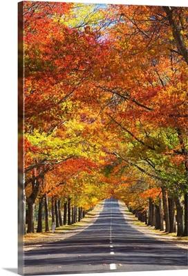 Memorial Avenue in autumn, Mount Macedon, Victoria, Australia, Pacific