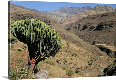 Mersheha River valley, Simien Mountains National Park, Ethiopia, Africa