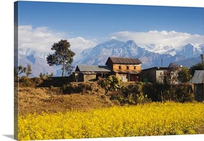 Mustard fields, Gandaki, Nepal