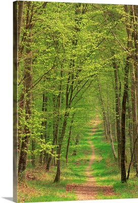 Narrow path through the trees in woodland, Forest of Brotonne, Haute Normandie, France