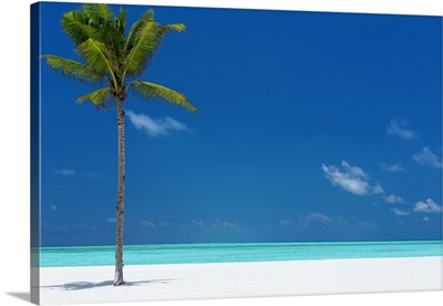 Palm Tree And Tropical Beach, The Maldives, Indian Ocean