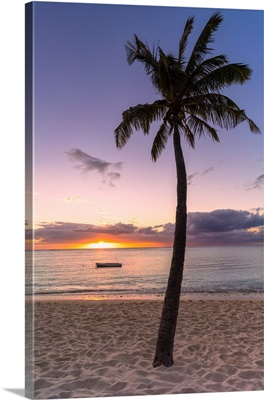 Palm Tree On Tropical Beach, Sunset, Le Morne Brabant, Mauritius, Indian Ocean, Africa