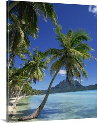 Palm trees fringe the tropical beach and sea on Bora Bora (Borabora), Tahiti