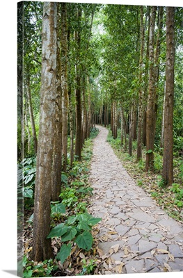 Path through the Forest at My Son, Vietnam, Indochina