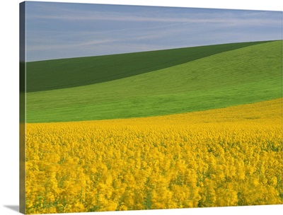 Patterned green and yellow agricultural landscape in spring, Aube, France