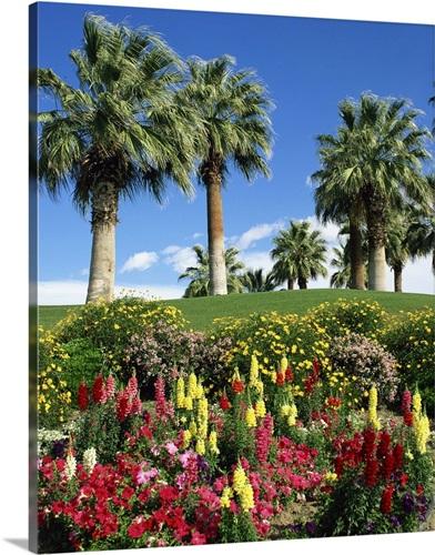 Petunias antirrhinum flowers with palms desert palm springs petunias antirrhinum flowers with palms desert palm springs california usa mightylinksfo