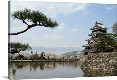 Pine tree, Matsumoto Castle, Matsumoto city, Honshu island, Japan